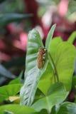 Insecto en la flor Foto de archivo