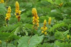Insecto en la flor amarilla Fotos de archivo libres de regalías