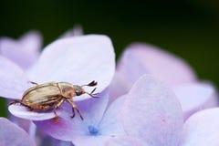 Insecto en la flor púrpura Foto de archivo