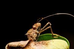 Insecto en la hierba verde foto de archivo