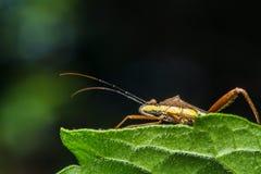 Insecto en la hierba verde foto de archivo libre de regalías