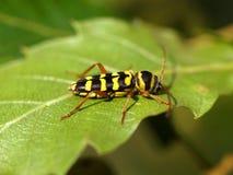Insecto en la hoja imagen de archivo libre de regalías