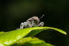 Insecto en la hoja verde fotos de archivo libres de regalías