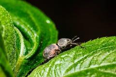 Insecto en la hoja verde fotos de archivo