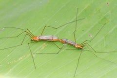Insecto en la hoja verde Foto de archivo