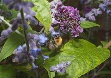 Insecto en la planta Fotografía de archivo