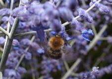 Insecto en la planta Imagenes de archivo