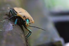 Insecto en la ramificación Fotos de archivo