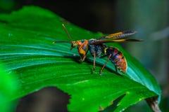 Insecto en las hojas verdes Fotografía de archivo libre de regalías