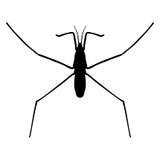 Insecto en lupa Strider del agua Imagen de archivo