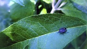 Insecto en su manera Imagen de archivo