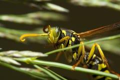 Insecto en tronco Foto de archivo