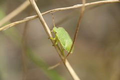 Insecto en un plan Fotos de archivo
