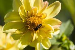 Insecto en una flor Foto de archivo