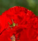 Insecto en una flor Imagenes de archivo