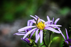 Insecto en una flor imagen de archivo libre de regalías