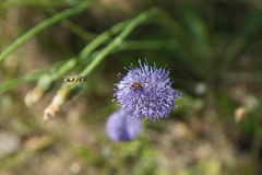 Insecto en una flor Imágenes de archivo libres de regalías