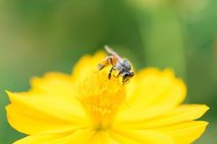 Insecto en una flor hermosa Imagen de archivo