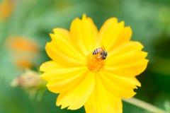 Insecto en una flor hermosa Fotografía de archivo