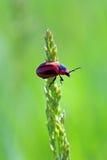 Insecto en una hierba Imagen de archivo