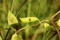 Insecto en una hoja en el vendee Francia Imágenes de archivo libres de regalías