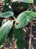 Insecto en una hoja fotografía de archivo libre de regalías