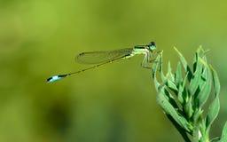 Insecto en verde y azul Fotos de archivo libres de regalías