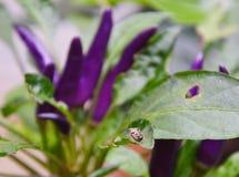 Insecto en vista de la gente en la hoja Imágenes de archivo libres de regalías