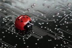 Insecto, fracaso o error del ordenador de software y de concepto de hardware, foto de archivo libre de regalías