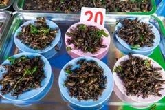 Insecto frito Fotografía de archivo