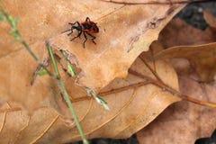 Insecto grande Foto de archivo