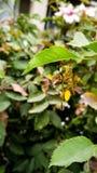Insecto hambriento Fotografía de archivo libre de regalías