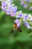Insecto hambriento Foto de archivo libre de regalías