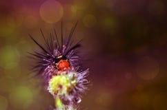 Insecto hermoso de la oruga en la planta en Malasia Fotos de archivo libres de regalías