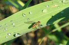 Insecto hermoso en la hierba verde, Lituania Imágenes de archivo libres de regalías