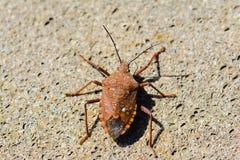 Insecto, insecto Fotos de archivo
