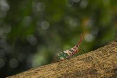 Insecto Latern Foto de archivo libre de regalías