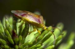 Insecto macro Imagen de archivo