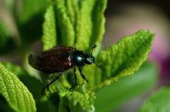 Insecto macro Imagenes de archivo