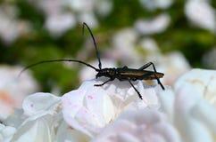 Insecto macro Fotos de archivo