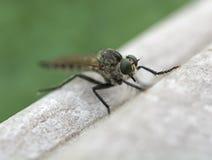Insecto (macro) Fotos de archivo