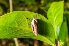 Insecto macro en las hojas verdes, fondo imagenes de archivo