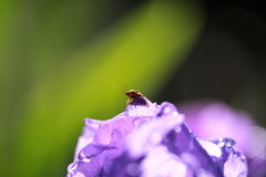 Insecto minúsculo Imagen de archivo libre de regalías