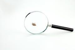 Insecto muerto Foto de archivo libre de regalías