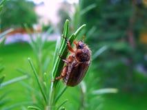 insecto, naturaleza, macro, verde, insecto, abeja, mosca, animal, escarabajo, flor, hoja, primer, insectos, araña, fauna, avispa, Imágenes de archivo libres de regalías