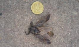 Insecto Ness grueso Fotografía de archivo libre de regalías