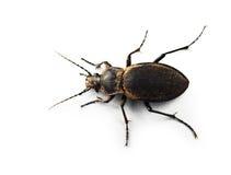 Insecto programado sucio Imagen de archivo