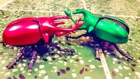 Insecto que lucha Fotos de archivo