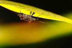 Insecto en la hoja   imágenes de archivo libres de regalías