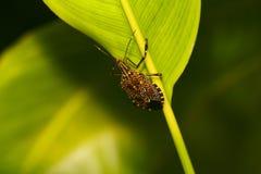 Insecto en la hoja   fotos de archivo libres de regalías